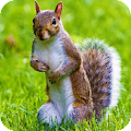Squirrel Wallpaper Best 4K APK