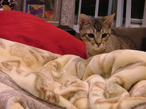Photo: My blanket is just like the jungle.