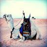 com.shake_se.live_wallpaper.camel_live_wallpaper