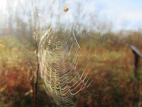 Photo: Spider in its web at Wegerzyn Gardens MetroPark in Dayton, Ohio.