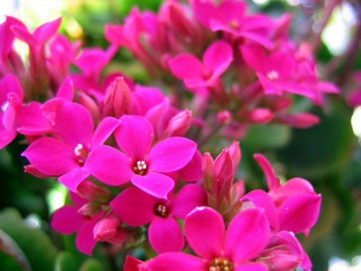 fiori e colori.... di GiovanniCT