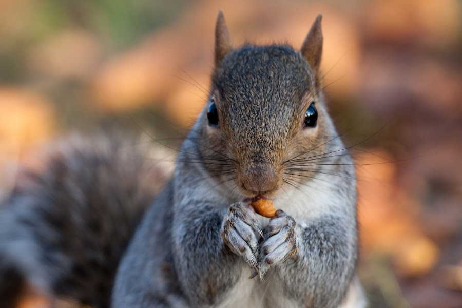 Yummiee by Diána Barócsi - Animals Other ( pet, wildlife, mammal, squirrel )