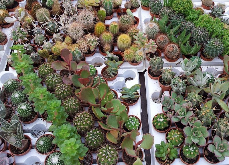 Collezione di succulente di joysphoto