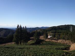 茶畑の作業道を降りる