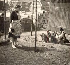 Photo: Jantje Oosting-Rabs, kippen voeren
