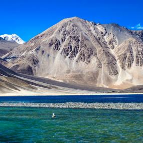 Pangong Tso, Ladakh,IN by Akash Deep - Landscapes Mountains & Hills ( salt water lake, indo-tibet border, changthang platue, pangong tso, incredible india, lakes in himalayas, pangong lake, ladakh, himalayas )