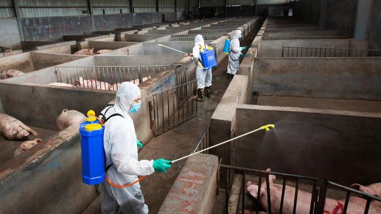 Chủng cúm lợn mới tại Trung Quốc có khả năng gây đại dịch trên ...
