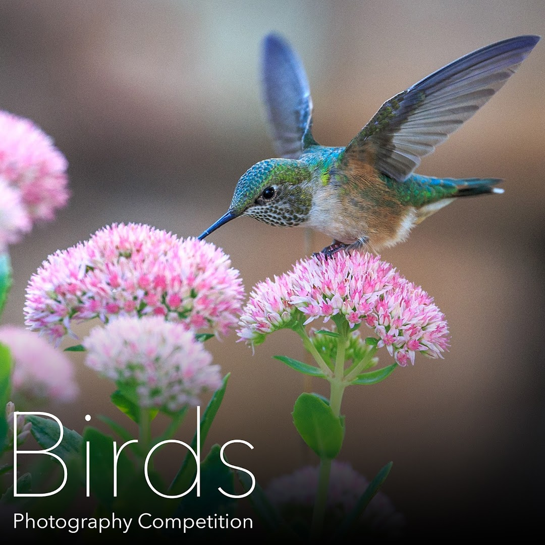 Birds Photography Competition. Amazing birds are all around us, capture amazing photos, submit and win amazing prizes.