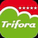 Trifora
