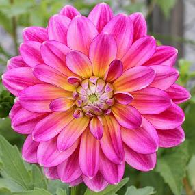 by Wiggo Løvik - Flowers Flower Gardens