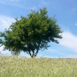 My favorite tree by Helena Moravusova - Nature Up Close Trees & Bushes ( tree )