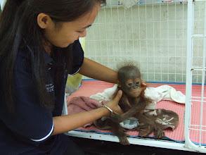Photo: Winning Photo - Orangutan Appeal UK