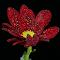 aIMG_2275_cr.jpg
