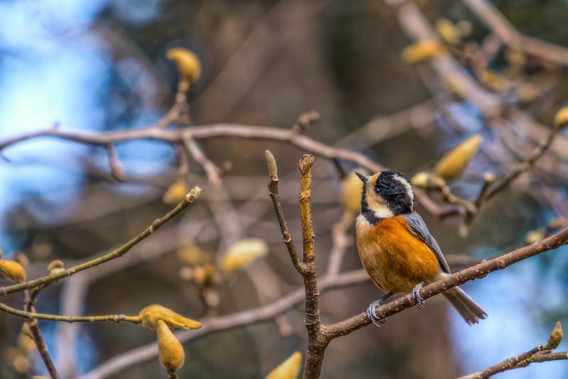 Aspettando la primavera di Alan_Gallo