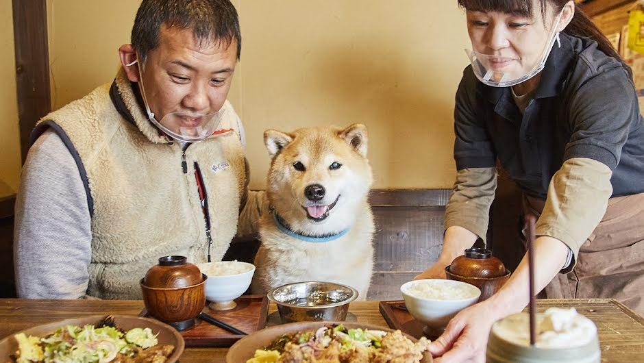 墨田区 犬茶屋本舗
