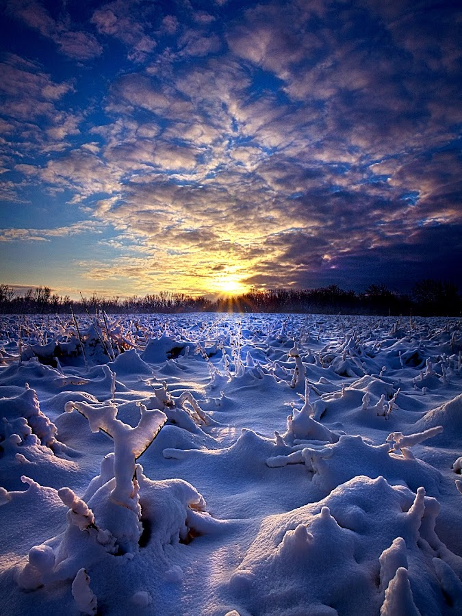 Wisconsin's Winter Wonderland by Phil Koch - Landscapes Weather ( summer. spring, natural light, vertical, wisconsin, photograph, environement, farmland, yellow, leaves, phil koch, spring, photography, sun, love, farm, nature, autumn, horizons, flowers, inspired, clouds, office, pwcwinter, orange, green, twilight, agriculture, horizon, scenic, morning, portrait, field, winter, red, seasons, national geographic, blue, serene, sunset, fall, peace, meadow, sunrise, earth, landscapes, floral, inspirational, , hdr, snow, white, quality, detail, cold )