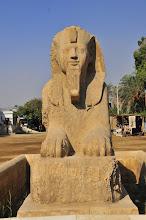 Photo: Sphinx in Memphis