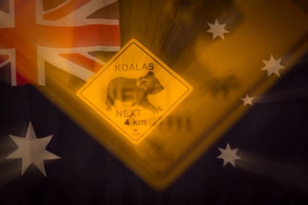 Save Koalas! di GIORGIO VOLPONI