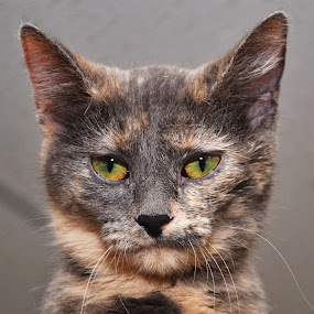 Tammy by Michael Cowan - Animals - Cats Portraits ( cat, shelter, adopt )