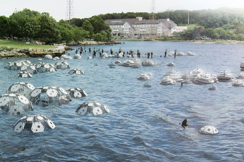 RISD and URI Offer Joint Program on Coastal Sustainability
