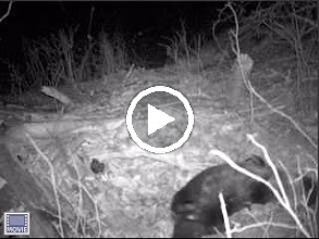 Video: Elizabeth Islands - video, click to play 1/31/2010 - 9:44 pm