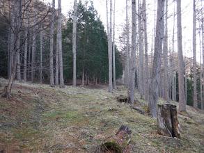 古い林道に出る