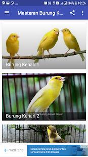 Masteran Burung Kenari - náhled