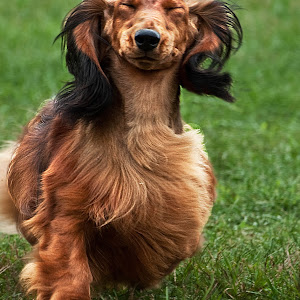 smilingdoxie2pixoto.jpg