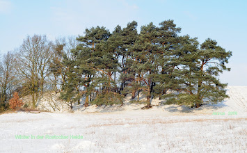 Photo: Winter in der Rostocker Heide