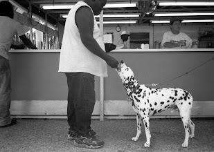 Photo: Dog Day at the Fair