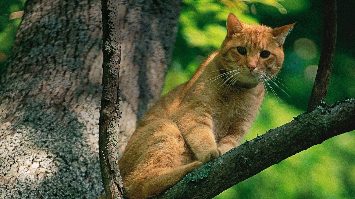 Watch Treetop Cat Rescue live