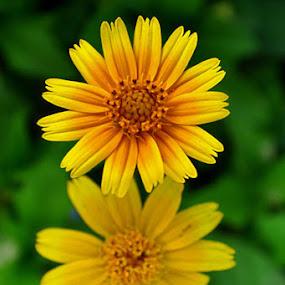 by Bem Beng - Nature Up Close Flowers - 2011-2013