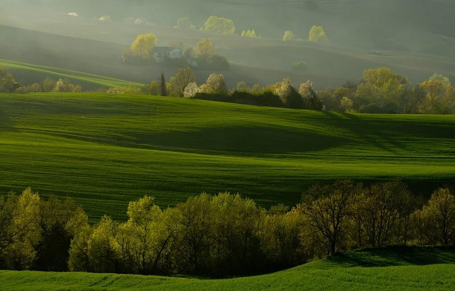 ***Green*** by Frans Scherpenisse - Landscapes Prairies, Meadows & Fields ( green, italy, fields )