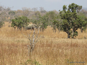 Photo: elefante