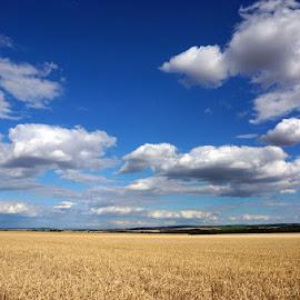 by Elena Lashneva - Landscapes Prairies, Meadows & Fields