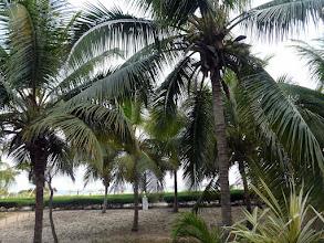 Photo: somptueuse palmeraie