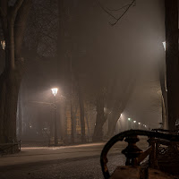 a park in the fog di