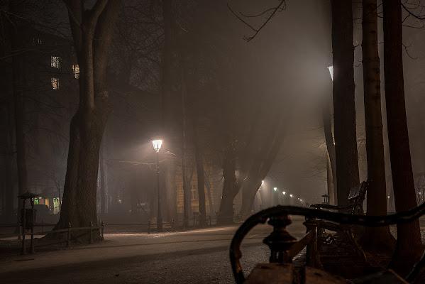 a park in the fog di antonioleo