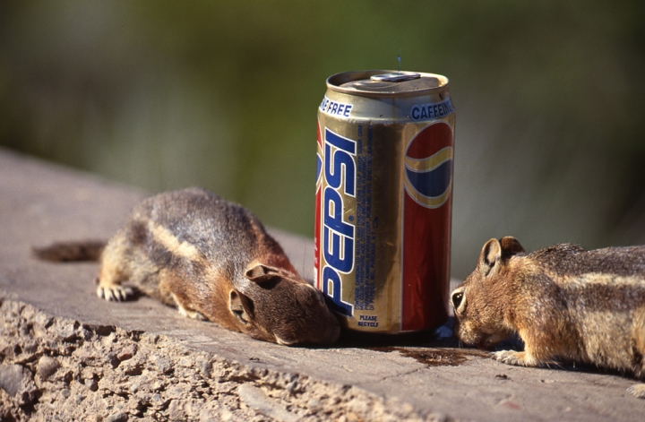 Everybody loves Pepsi di simoneamaduzzi