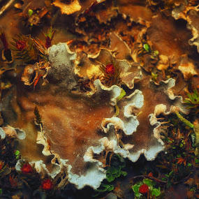 Wavey by Juliusz Wilczynski - Nature Up Close Other plants
