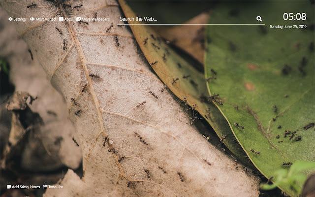 Ants Wallpaper HD New Tab Theme