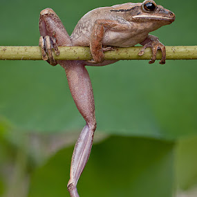 'Ouupss!.... slip by Lessy Sebastian - Animals Amphibians