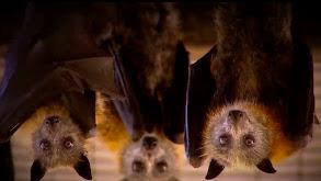 A Tornado of Bats and More thumbnail
