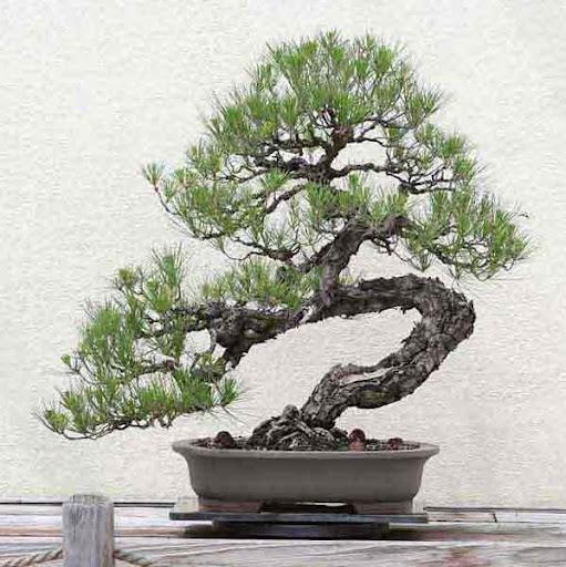 日本の盆栽デザインのアイデア