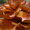 Jack-o'-Lantern Mushroom