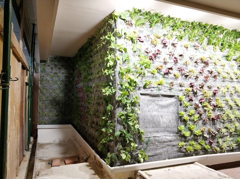 Plantación reciente del jardín vertical