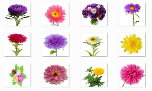 Aster Flower Onet Connect Game