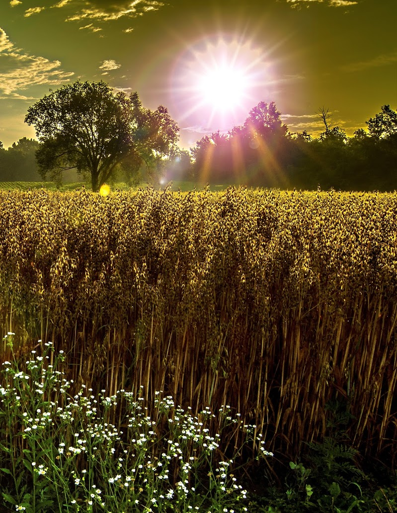 power of the sun di renato_alberio
