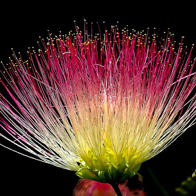 Exotic Pet by Jay Reich - Flowers Single Flower ( plant, pink flower, plan, green, white, pink, yellow, dots, exotic, black,  )