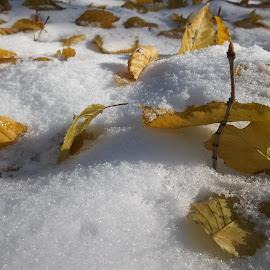 Зима by Georgi Kolev - Nature Up Close Leaves & Grasses ( сняг., слънце., сенки., зима., форми., листа. )